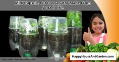 You can make mini greenhouse propagators with pop bottles like this!
