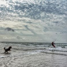 Wait for me buddy! I'm coming!  #kitesurfen #kitesurfing love that water!! A bit salty though ...  #Sunnythedog #bordercolliesofinstagram#goldenretrieversofinstagram #bordercollie #goldenretriever #goldenborder#bordercolliemix #goldenretrieverpuppy #puppy #puppiesofinstagram #goldenborderretriever#ilovemydog #goldenbordercollie #bestwoof