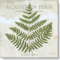 Mountain Fern