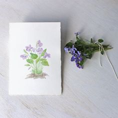 Original watercolor painting of wood violets by Kathleen Maunder