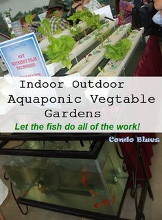 Condo Blues: Aquaponic Gardens for Lazy Gardeners. How to use fish to fertilize your vegetable garden the lazy way with an aquaponics garden. Aquaponics Diy, Aquaponics System, Hydroponics, Aquaponics Greenhouse, Organic Gardening, Gardening Tips, Cool Things To Make, Things To Come, Green Living Tips