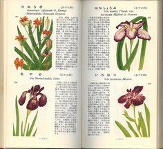 学生版原色植物図鑑・牧野富太郎