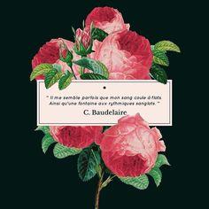 #Baidelaire #poetry #quote #peony #AllLivesMatter