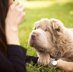 Tonkey, a cadela mais famosa do Instagram - Observador
