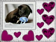 subir mas fotos de perritos al blog