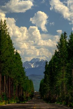Road Through the Trees in Yellowstone  This is the south entrance road for Yellowstone National Park. As we drove south, exiting the park, we came to this iconic view. Miles of road, stretching through the pines, with the begining of the Grand Teton Mountain range in the distance.
