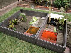 Love this, uses raised bed garden frame for Russian Tortoise habitat
