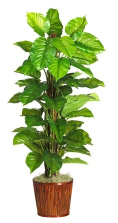 Silk Large Leaf Philodendron Floor Plant In Pot Artificialplantsdecoryards Artificialplantsbedroom Plants House