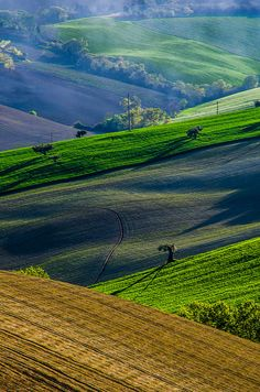 Campagna Montelupone, Marches, Italie.