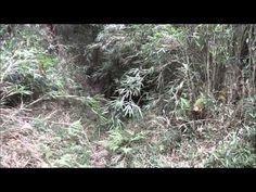 Video of yesterdays hike in the Soraku District.