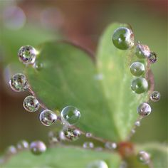 water drops on green heart-shaped leaf