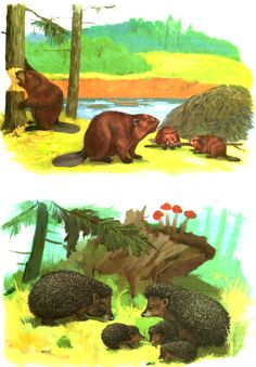 Different Forms Of Art, Preschool Education, Forest Animals, Science And Nature, Animals For Kids, Animal Drawings, Art Forms, Montessori, Kindergarten