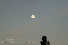 The Strawberry Moon setting this morning.