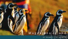 Penguin Lover ? Come to Patagonia and see the penguins in their natural habitat