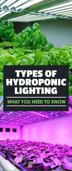 Indoor Vegetable Gardening When growing indoors, you have to supplement with artificial light. The different types of hydroponic lighting have different benefits. Aquaponics System, Hydroponic Farming, Hydroponic Growing, Aquaponics Diy, Aquaponics Greenhouse, Hydroponic Solution, Hydroponics Setup, Greenhouse Plants, Indoor Vegetable Gardening