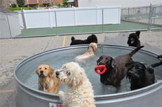 A pet resort with a plunge pool. Galvanized tubs that can't be chewed apart like blue plastic ones. Dog Yard, Dog Fence, Dog Kennels For Sale, Dog Playground, Dog Hotel, Pet Resort, Dog Rooms, Dog Daycare, Dog Agility