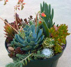 SUCCULENT plants Succulent Wedding Succulent DIY by Succulentsplus