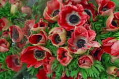 Marianne Red anemones at New Covent Garden Flower Market October 2016