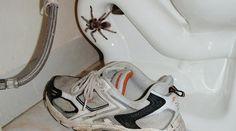 Les araignées, dans la maison, ce n'est pas très agréable. Les toiles, c'est moche et, souvent, les petites bêtes qui vont avec, ça fait peur ! Les tuer ? Tout de même pas. Nous ne sommes pas...