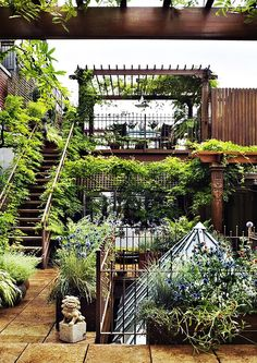 A secret rooftop garden in Manhatten, want to put up lattice and plant like this