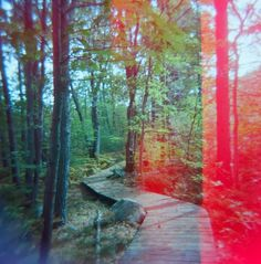 The Holga Darkroom: How Does YOUR Holga See Fall? Submissions!