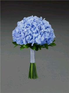 Blue hydrangea bouquet. I'll add some coral  and yellow colored roses also.  ****for my best woman (aka maid of honour), I'd add some pinky-coral roses)