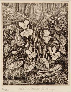 Robin Tanner I White violets Vintage Botanical Prints, Botanical Drawings, Botanical Art, Art Sketches, Art Drawings, Collage Illustration, Illustrations, Vintage Drawing, Plant Drawing