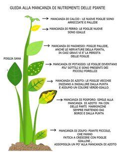 Come riconoscere le carenze nutrizionali dalle foglie delle piante | Ambiente Bio