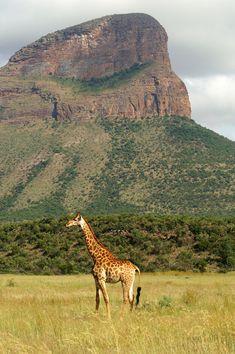 Entabeni Reserve #1 - , Limpopo