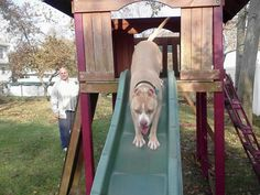 Another Member entering into her 4th year with us!! Rita Schrecongost of Shelter Link! Check out all that Shelter Link does for the animals at the Town of Islip Animal Shelter and throughout the community!  http://www.shelterlink.com/