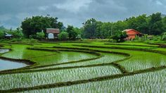 """@live_life_love_travel on Instagram: """"Rice paddies in the hills outside of Luang Prabang"""" Live Life Love, Luang Prabang, Us Travel, Adventure Travel, Golf Courses, The Outsiders, Rice, Places, Instagram"""