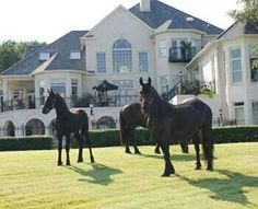 A few Horses at the house
