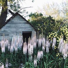 OldFarmHouse ☮︎ - https://www.instagram.com/springblog