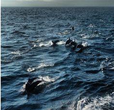 Puerto Vallarta, James Martin, Whale, Animals, Islands, Friends, Whales, Animales, Animaux