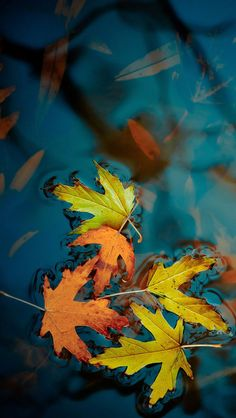Fallen leaves iPhone Wallpapers