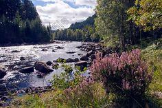 River Dee, Ballochbuie Forest, Balmoral  Estate, Aberdeenshire, Scotland