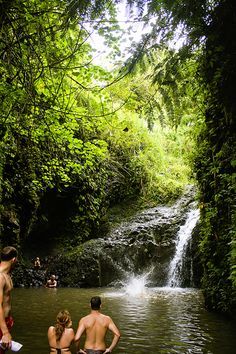 let birds fly: MAUNAWILI FALLS TRAIL | OAHU, HAWAII