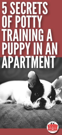 Potty training a puppy can be a challenge any time especially when you live in an apartment. Check out these potty training tips for puppies in an apartment. #puppies #puppytraining #housetraining