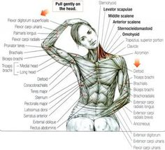 Stretching: How to Stretch the Neck and Trapezius #exercise #fitness