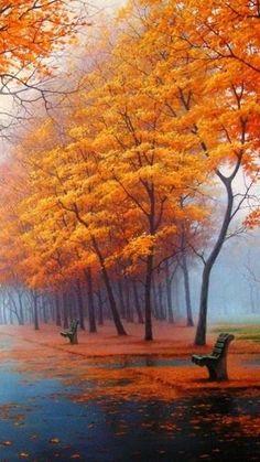 benches under orange trees