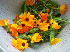 Calendula: The Amazing Flower That Heals Wounds, Fights Dermatitis, And Even Repairs Varicose Veins  - http://www.offthegridnews.com/2014/08/28/calendula-the-amazing-flower-that-heals-wounds-fights-dermatitis-and-even-repairs-varicose-veins/