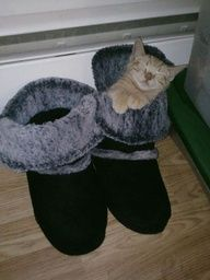 Puss in Boot