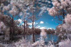 Forest of the Pink Trees by Julie Everhart on 500px