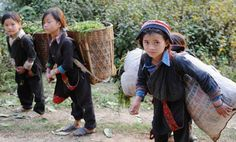 Kids go to school daily but come home to work, do chores, & if so, watch a younger sibling. Or they leave to work. All people over the age of 18 need to work 6 hours a day, and all kids attending school must work hours a day. Life In North Korea, Kids Going To School, Vietnam, Children, 18 Hours, Sibling, Families, Parents, Meet