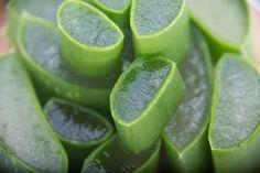 Aloe Vera, Lime, Fruit, Food, Plants, Health, Limes, Essen, Meals
