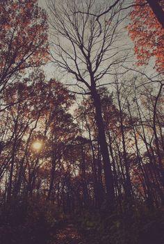 À l'ombre de la forêt.