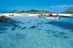 Galapagos Shallows