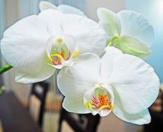 Moje falki Lubicie storczyki uprawiacie? . . #rytmynatury#storczyk#storczyki#orchid#orchidea#phalaenopsis#kwiaty#flowers#instaflowers#nature#ilovenature#roślinyl#pieknekwiaty#kwiat#instaflowers#orchids#orchidee#orquidea#orquideas#orchidshow#phalaenopsisorchid#orchidworld#flom#flos#orchideen#flor#florist#flowersofinstagram#flores