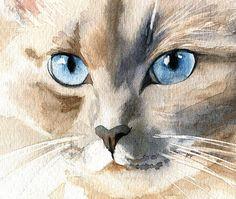 Ragdoll Siamese Cat Art Print of my Watercolor by rachelsstudio