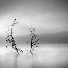 George Digalakis paisagem preto e branco 14